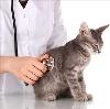 Ветеринарные клиники в Каменногорске